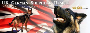 uk_german_shepherd_rescue_angels_uk-gsr001024.jpg