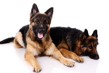 Women and German Shepherd