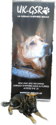uk_german_shepherd_rescue_angels_uk-gsr001048.jpg